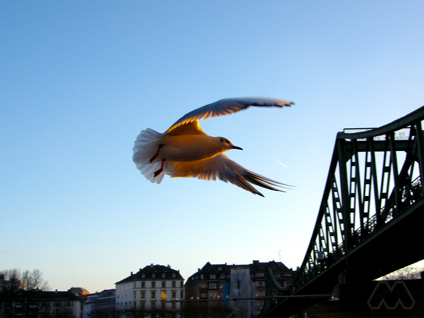 Uccello in volo – Francoforte sul Meno